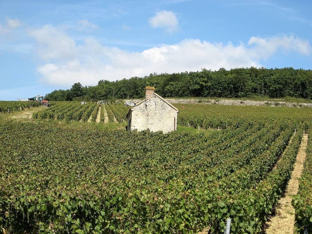 Wine Inheritance Tax