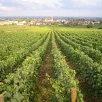 French Wine Region marsannay