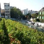 urban wines worth investment