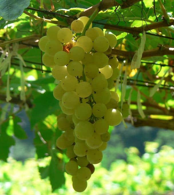 2017 wine trend