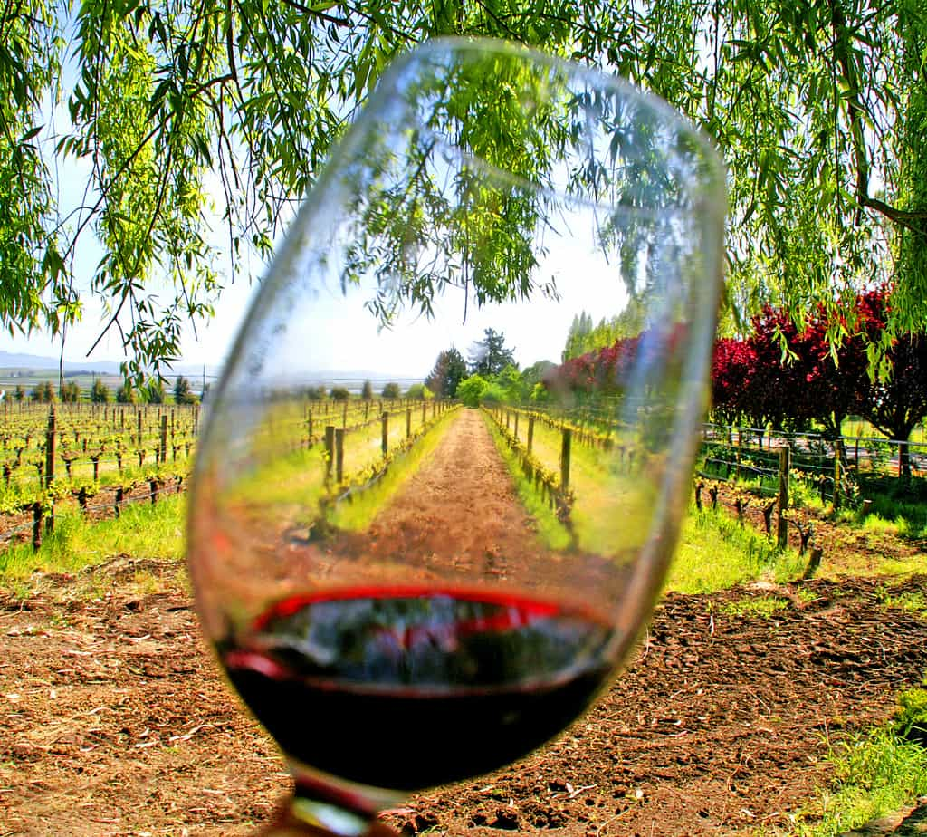 How to taste fine wine the ultimate guide to improving your palate for wine vinfolio blog - The splendid transformation of a vineyard in burgundy ...
