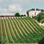 The Loire Vintage Report for 2017 bodes well for collectors.