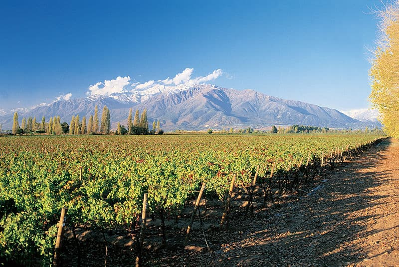 Guide to Chilean Wine