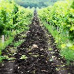 We xplain how soil affects wine