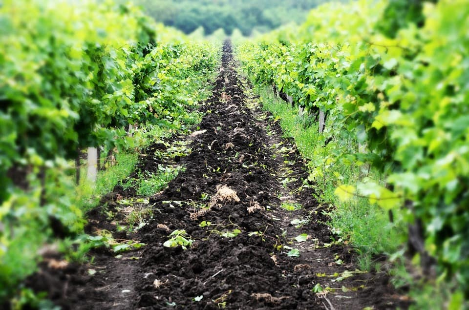 How Soil Affects Wine