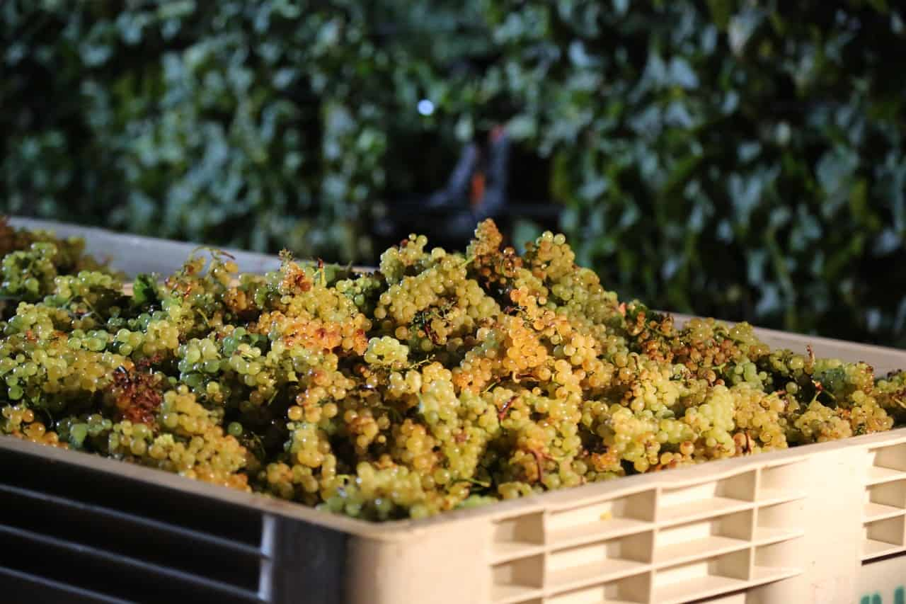 The 2018 Napa harvest was bountiful.