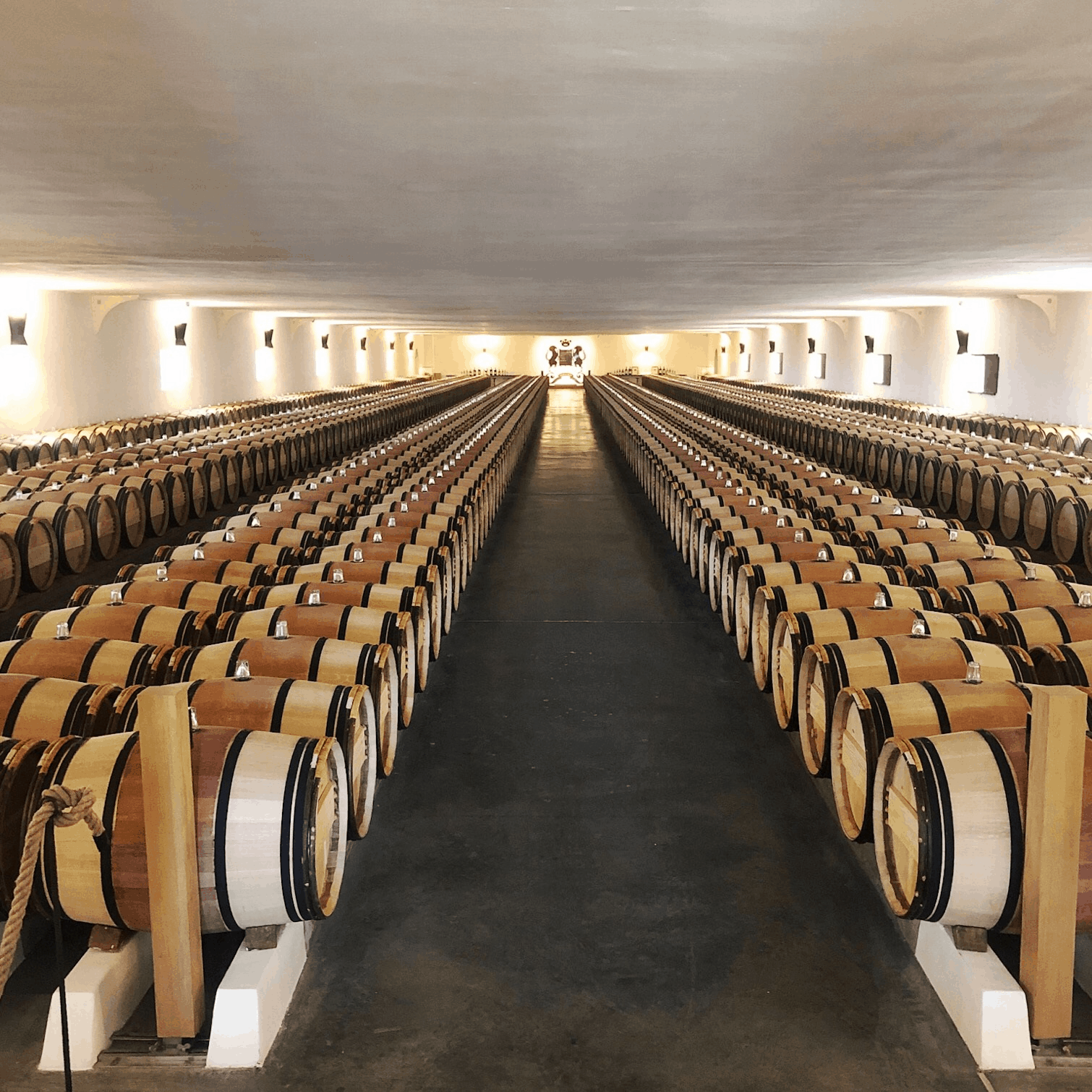 Barrels of 2018 Bordeaux en primeur in a wine cave