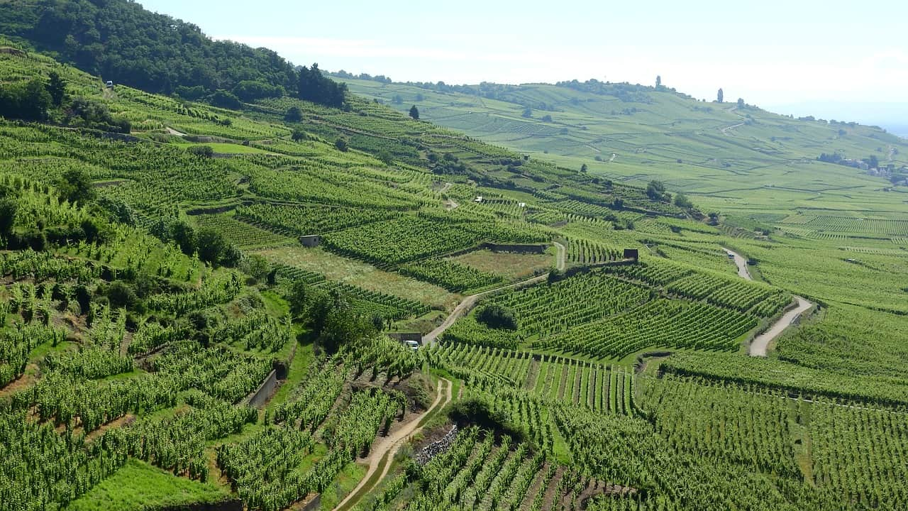 French vineyards that fall under one of the many Alsace wine appellations