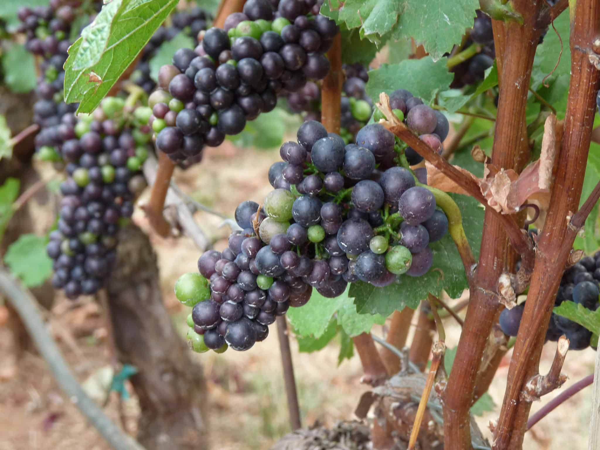 Willamette Valley Pinot Noir is rightly famed among wine collectors.