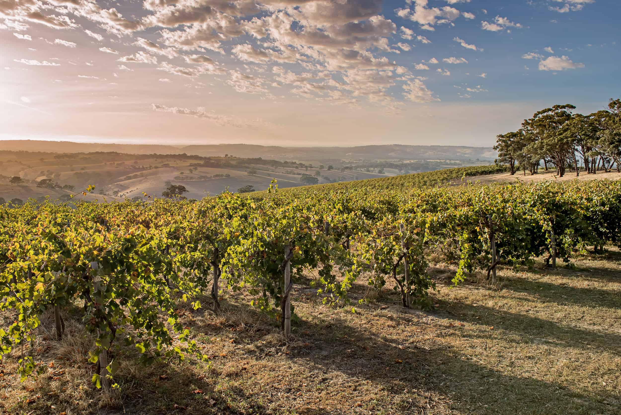 Clarendon Hills Winery vineyards