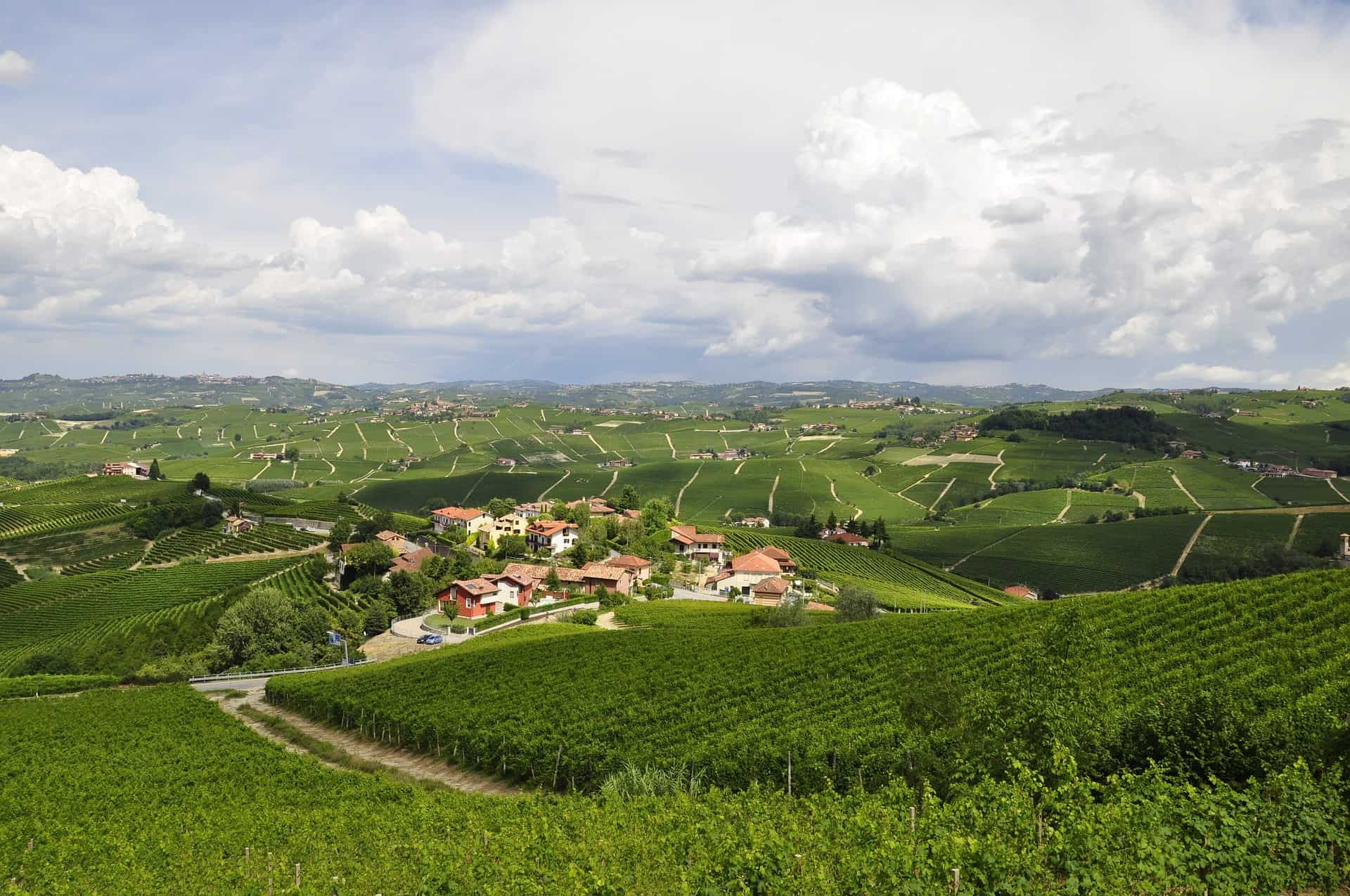 Hilltop view of Langhe wine region