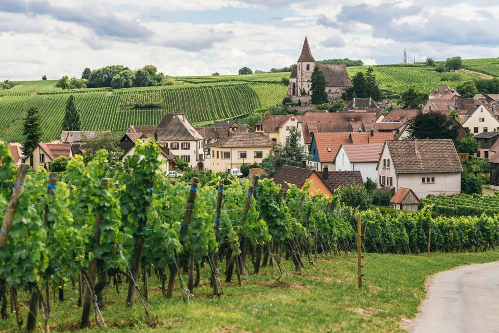 According to the 2020 Burgundy vintage report, vineyards like this one weathered a chaotic year surprisingly well, with promising results